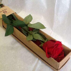 Rosa en Caja